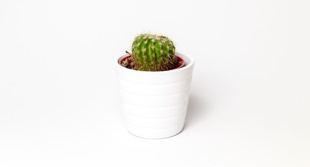 come togliere le spine dei cactus